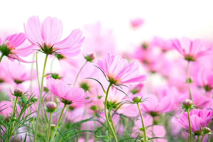 que-es-la-alergia-al-polen